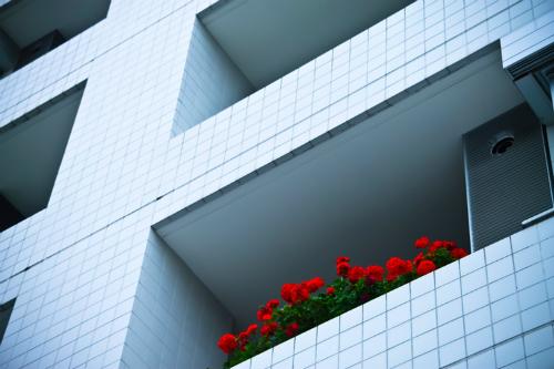マンションと赤い花