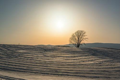 雪の中の哲学の木